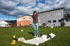 Junghunde und Welpenabschluss  Herbst 2019